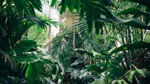Превью обои растения, ботанический сад, оранжерея, зеленый