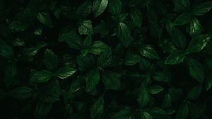 Превью обои растения, листья, зеленый, макро