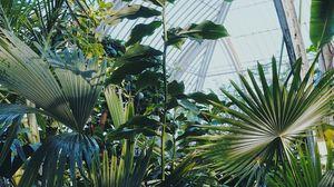 Превью обои растения, оранжерея, сад, экзотика