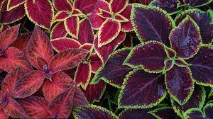 Превью обои растения, разноцветный, листья, поверхность