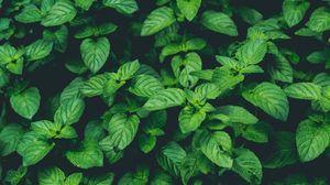 Превью обои растения, зеленый, макро, крупным планом