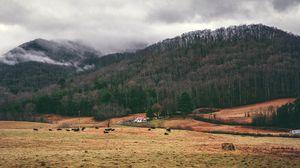 Превью обои равнина, горы, трава, деревья, туман