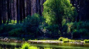 Превью обои река, деревья, лес, солнечный свет, трава