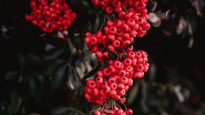 Превью обои рябина, ягоды, красный, грозди, растение