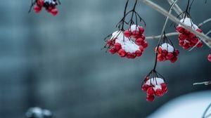 Превью обои рябина, ягоды, морозный, размытость, ветка