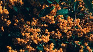 Превью обои рябина, ягоды, ветка, желтый, листья