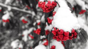 Превью обои рябина, снег, ягоды, ветка, зима