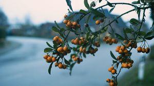 Превью обои рябина, ветка, ягоды, размытость