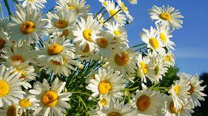 Превью обои ромашки, букет, небо, солнечно, лето