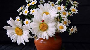 Превью обои ромашки, цветы, букет, ваза, божья коровка, лето