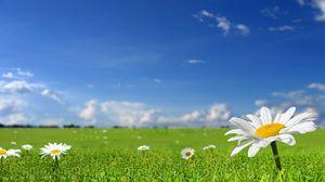 Превью обои ромашки, поле, небо, природа, солнечно, трава