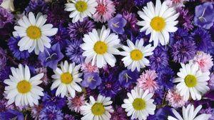 Превью обои ромашки, васильки, колокольчики, цветы, яркие