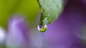 Превью обои роса, капли, лист, изгиб