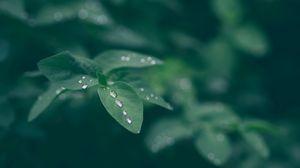 Превью обои роса, лист, капли