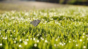 Превью обои роса, трава, бабочка, насекомое, солнечный свет