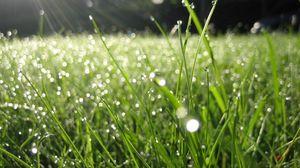Превью обои роса, трава, капли, зеленый, лето, утро