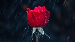 Превью обои роза, дождь, капли, влага, красный