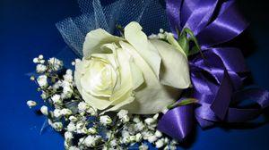 Превью обои роза, гипсофил, оформление, лента, фон