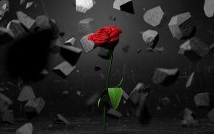 Превью обои роза, камни, осколки, цветок, красный