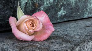 Превью обои роза, цветок, лепестки, камень, эстетика