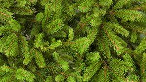 Превью обои рождество, новый год, елка, зеленая