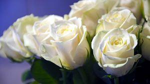 Превью обои розы, белоснежные, букет, бутоны, крупный план