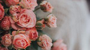 Превью обои розы, цветы, букет, розовый, нежный