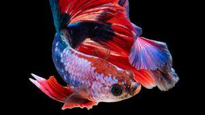 Превью обои рыбка, аквариум, красный, темный фон