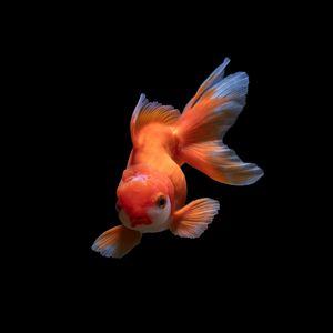 Превью обои рыбка, подводный мир, плавать, оранжевая