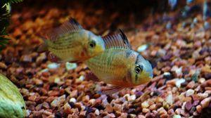 Превью обои рыбки, аквариум, вода, макро, минимализм