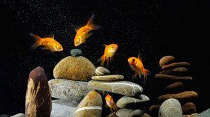 Превью обои рыбы, аквариум, камни, чёрный фон