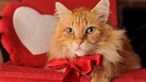 Превью обои рыжий кот, бант, кот