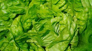 Превью обои салат, листья, овощ, крупным планом