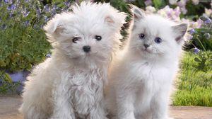 Превью обои щенок, котенок, пара, дружба
