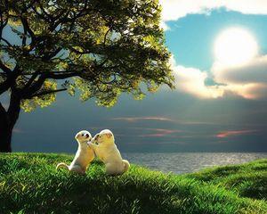 Превью обои щенок, пара, закат, природа, играть, малыши