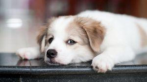 Превью обои щенок, собака, морда, взгляд, грустный