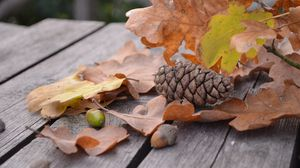 Превью обои шишка, желудь, листва, осень