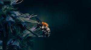Превью обои шмель, насекомое, цветок, крупным планом