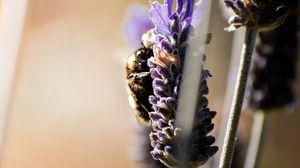 Превью обои шмель, насекомое, цветок, макро