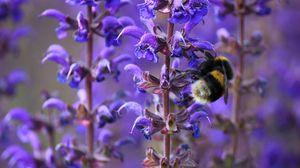 Превью обои шмель, пчела, насекомое, сиреневые, цветы, макро, весна