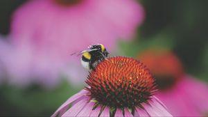 Превью обои шмель, цветок, бутон, пыльца