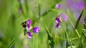 Превью обои шмель, цветы, растения, макро