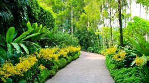 Превью обои сингапур, ботанический сад, тропинка, деревья
