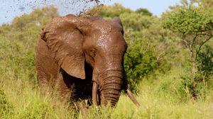 Превью обои слон, грязь, купание