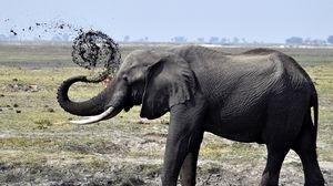 Превью обои слон, грязь, плескаться, прогулка