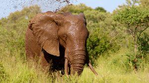 Превью обои слон, грязь, прогулка, трава