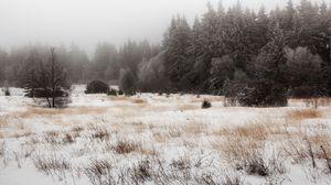 Превью обои снег, деревья, поле, трава