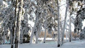 Превью обои снег, деревья, зима