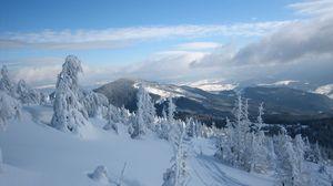 Превью обои снег, карпаты, гора стиг, деревья, украина, зима, свидовец, раховский район