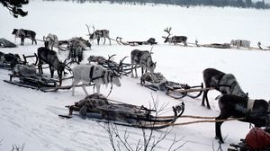 Превью обои снег, олени, сани, упряжка, транспорт, северный полюс